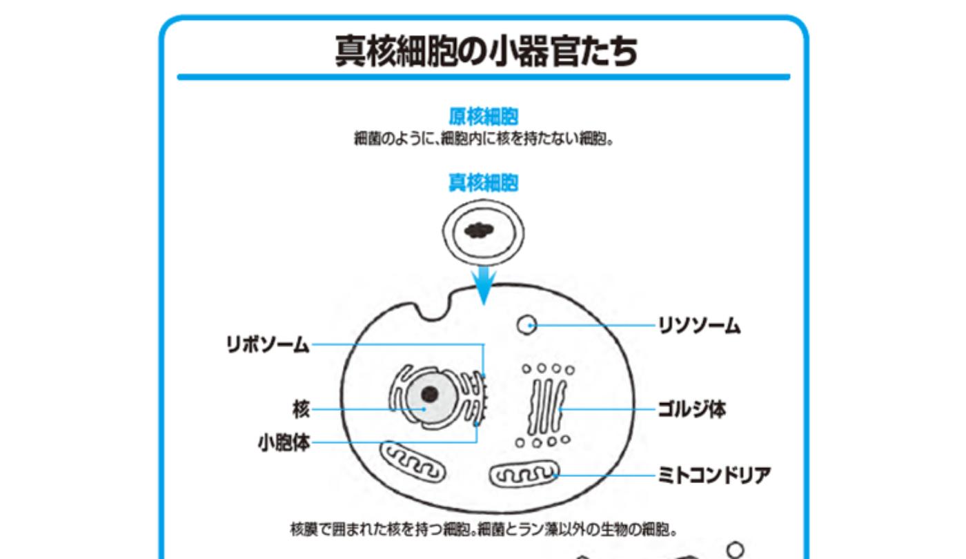 から なる 細胞 生物 原核
